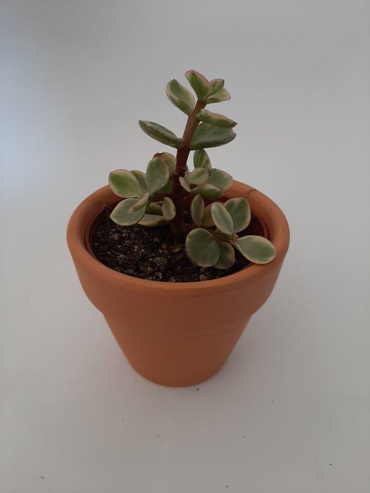 Cactus #06